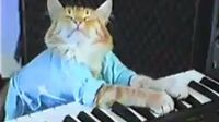 Charlie Schmidt's Keyboard Cat