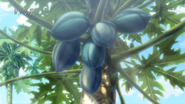 Papayeet Potato (Blue) Eps 65
