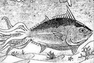 SquidTunaManga