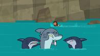 SharksandFang