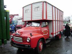 Bedford VGY 184 horse box Sandbach