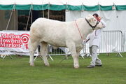 East of Engjand Show livestock judging - IMG 0109