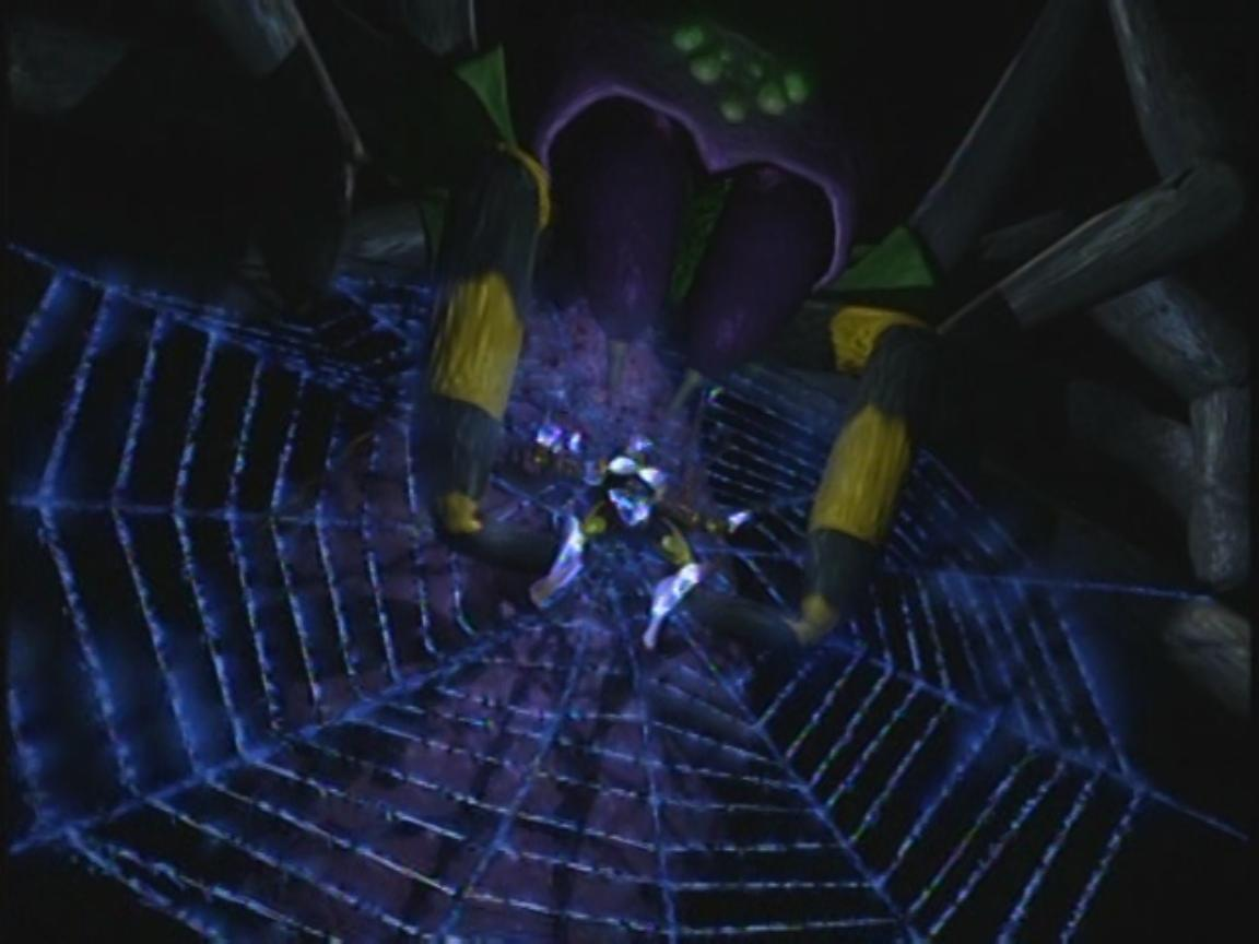 Tarantula Web Tarantulas Spinning Webs in