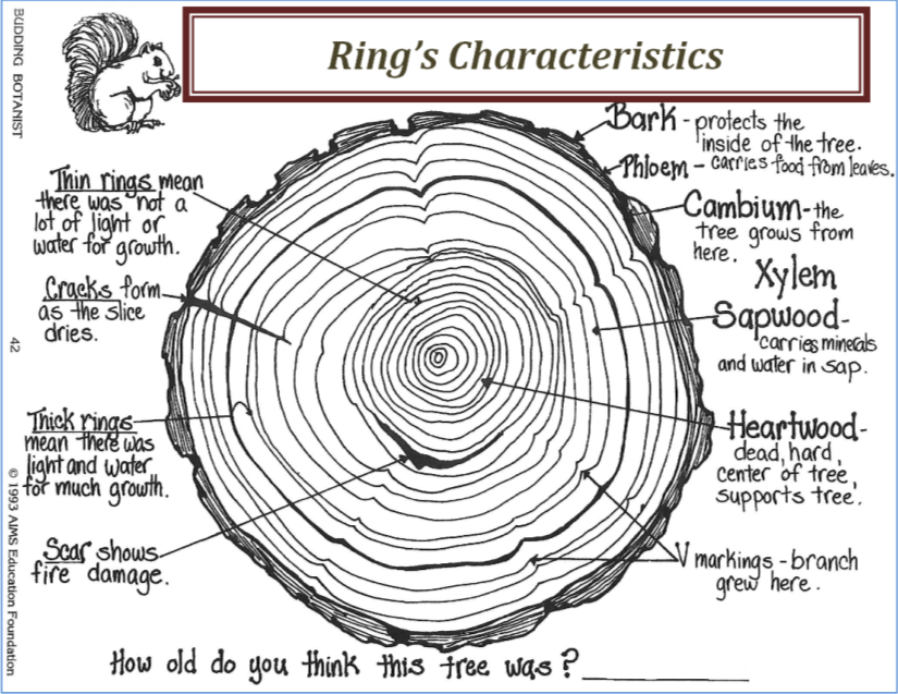 wiki Center of a ring