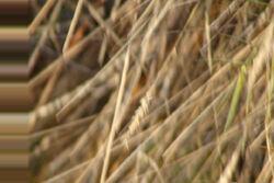 Distorted Grass
