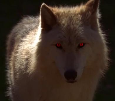 File:AlcideWolf.jpg