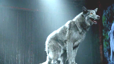 File:Coot wolf.png