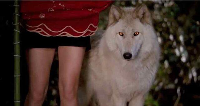File:Alcide-wolf.jpg
