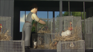 ChickensToSchool20