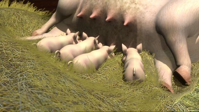 File:ThomasAndThePigs82.png