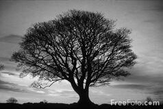 B, w, tree
