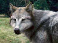 Werewolves 11
