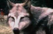 Leahwolfform
