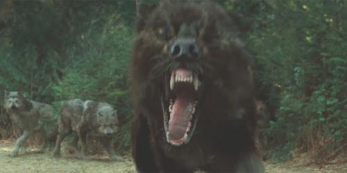 File:Wolves-new-moon.jpg