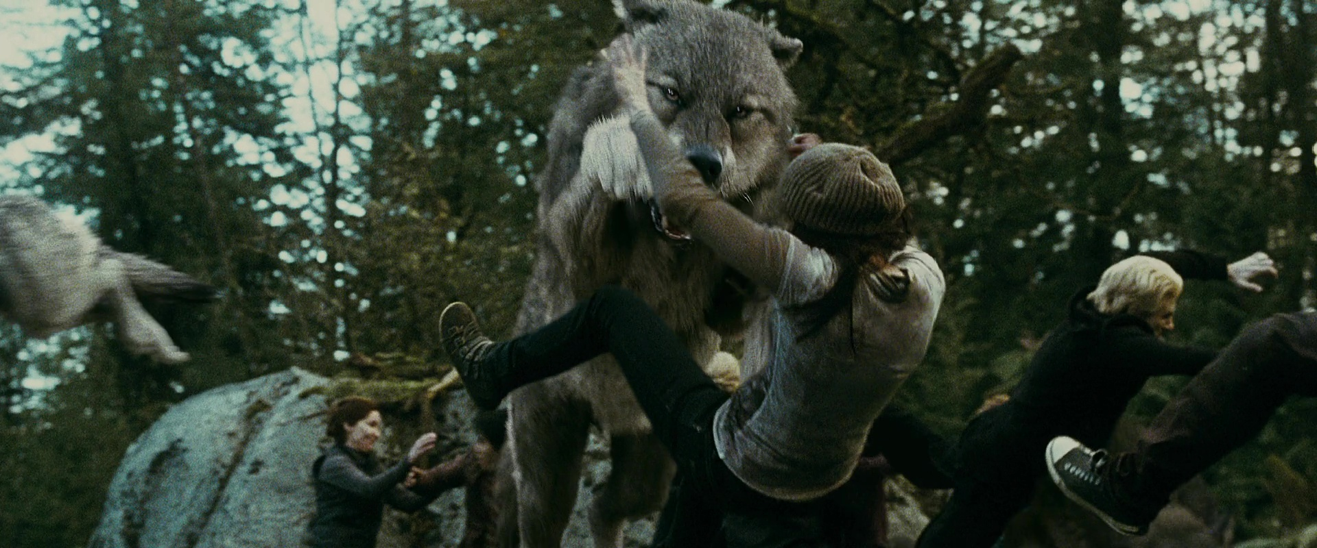 Wolf-attacking-newborn