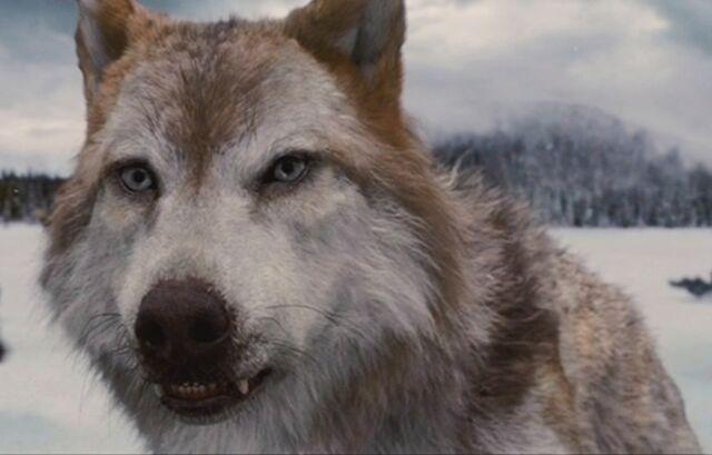 File:Wolfleah.jpg