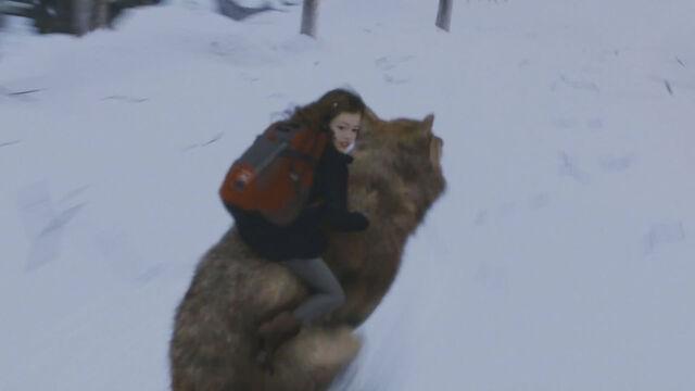 File:Renesmee-riding-jacob-taylor-lautner-wolf-twilight-breaking-dawn-2.jpg