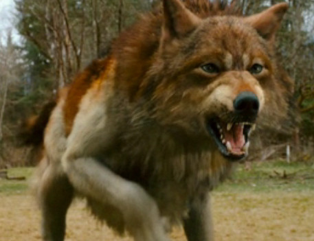File:Jacob-Black-the-russet-wolf-9055281-457-351.jpg