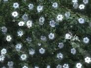 Pretty and creepy flowers