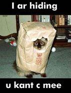 Seehere.blogspot.com 20cats 20 46