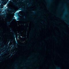 Lucian in Werewolf form.