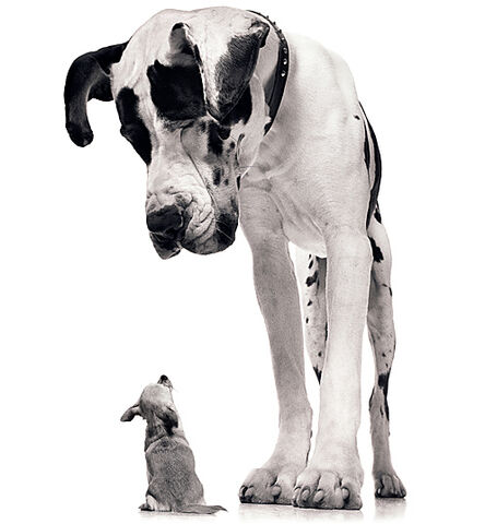 File:Big-dog-little-dog.jpg