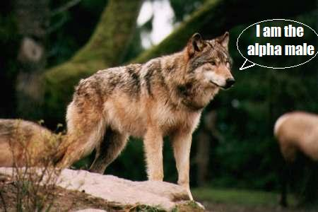 File:Wolf027.jpg