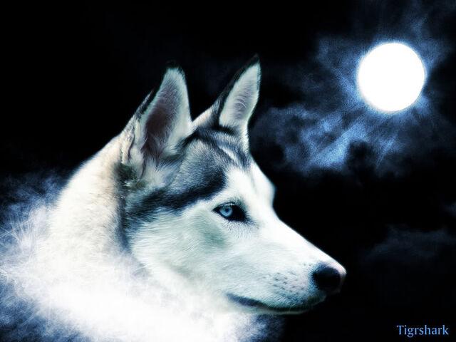 File:Blueh Wolf.jpg