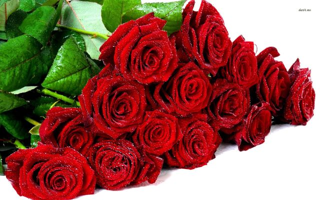 File:21360-bouquet-of-wet-roses-1680x1050-flower-wallpaper (1).jpg