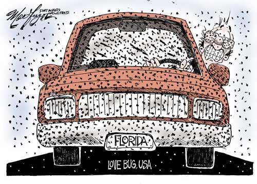 File:Florida-Lovebug-Cartoon.jpg