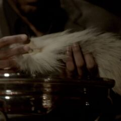 Finn with a fox's tail