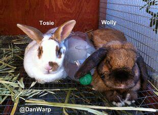 DanWarp's Bunnies