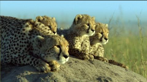 Thumbnail for version as of 02:22, October 9, 2012