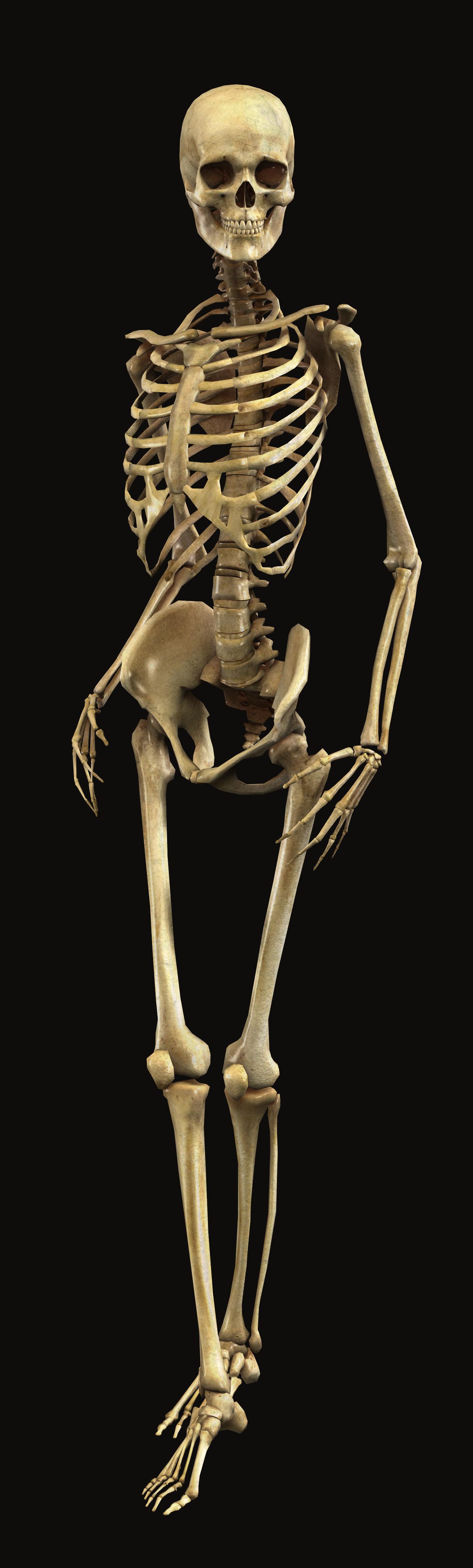 image - full-3d-human-skeleton-bryan-brandenburg | villains, Skeleton