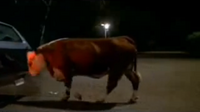 Burger King Cow Pushing Car