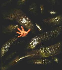 Anaconda0