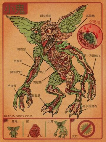 File:Gremlin anatomy.jpg