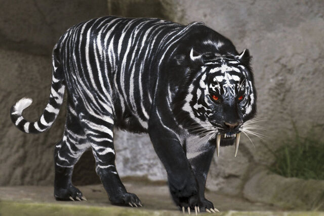 File:Black Tiger.jpg