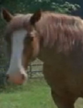 File:Siggard Horse 101 Crop.jpg