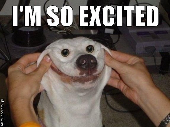 File:I'm so excited (dog face).jpeg