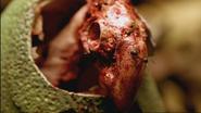 WWB1x1 DeadGastornisChick