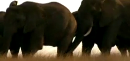 File:Ppelephant.png