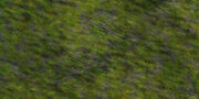 Forest-Background-(Original)