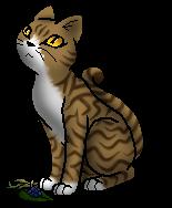 Warrior Cats Blattpfote