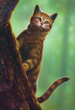 Warrior Cats Feuersterns Mission Hierarchie