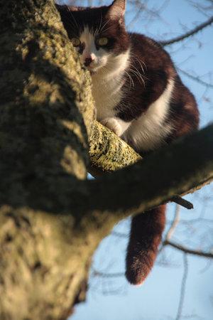 File:Top Cat by Grant Thomas.jpg