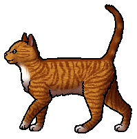 File:Gingerpaw.apprentice.png