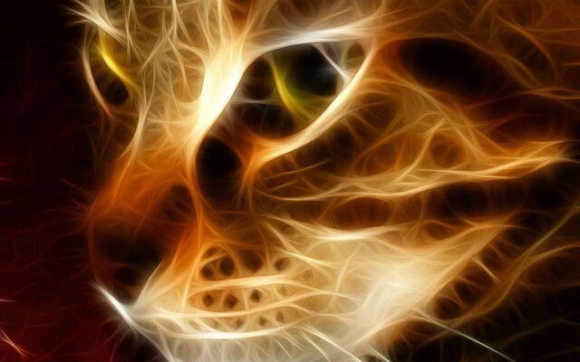 File:Beautiful-cat.jpg