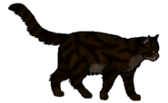 Tigerclaw.warrior