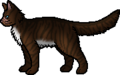 Hawkfrost.rogue.png